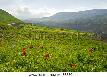 View of Landscape of Galilee, Israel