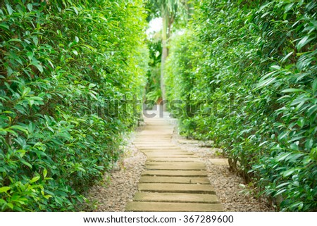 view of Landscaping  the path in the garden - stock photo