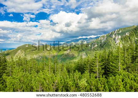 View of mountain forest, landscape in the summer with blue sky. Green woods in Tatras Mountains, Poland