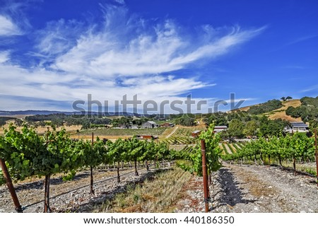 View of new vineyard from under an oak tree on the scenic hills of the California Central Coast where vineyards grow a variety of fine grapes for wine production, near Paso Robles, CA. on Highway 46 - stock photo