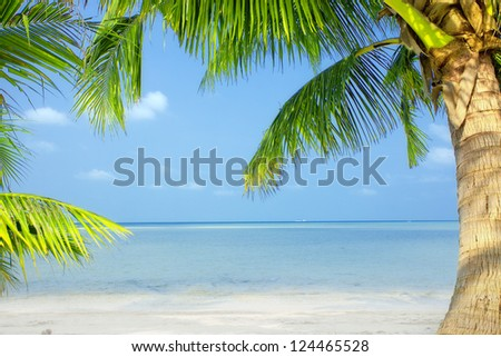 view of nice green  tropical palms on blue sky back - stock photo