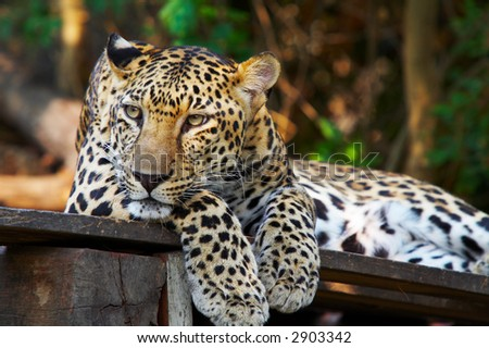 view of nice leopard cat