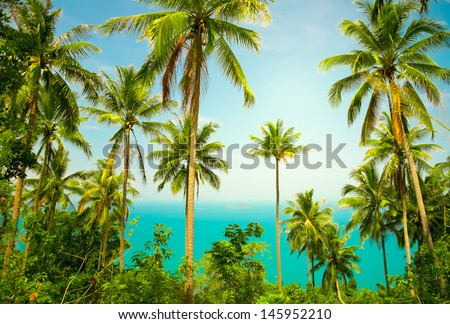 View of nice tropical background with coconut palms. Thailand - stock photo