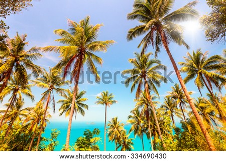 View of nice tropical landscape with coconuts palm trees and sea - stock photo