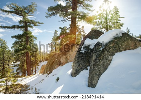 view of  nice winter  forest during sunny morning  - stock photo