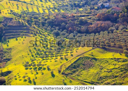 View of olive tree grove in the Leonforte countryside - stock photo