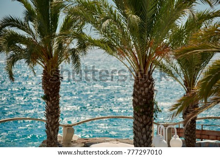 View of palm trees against sea and blue sky.
