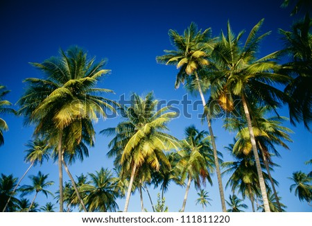 View of palm trees against sky - stock photo