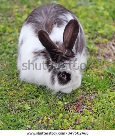 View of rabbit, close-up  - stock photo