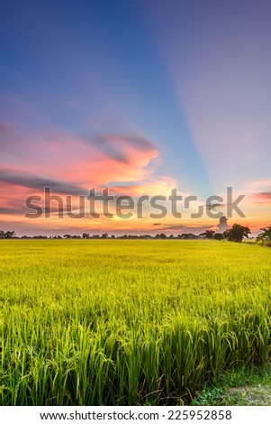 View of rice field and clouds in morning and evening time , Thailand