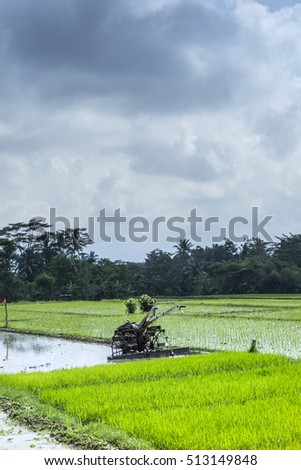 view of rice field , Paddy fields, Farming in countryside , Indonesia