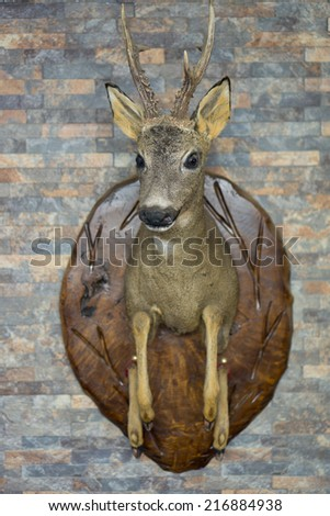 View of Roe Deer head trophy - stock photo