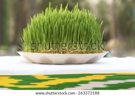 View of Sabzeh - sprouted wheat germ symbolized rebirth for Nowruz celebration  - stock photo