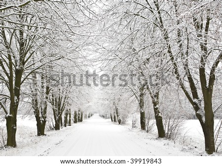View of snow alley with trees covered with snow. - stock photo