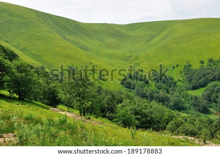 view of soft looking green-yellow slope of the mountain with some trees