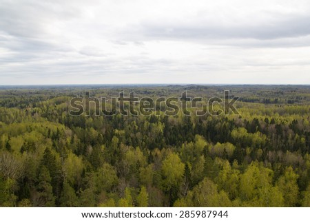 View of spring forest on heights of the flight of the bird