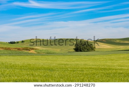 View of Steptoe Butte, Palouse Country in eastern Washington - stock photo