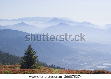 View of Tatra mountain peaks panorama in the fog with small coniferous tree in the foreground and town in valley. View from the trail in Mala fatra mountains