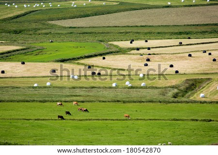 View of the agricultural fields and cattle from above, South Iceland - stock photo