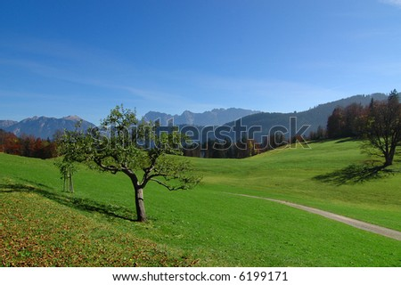 View of the alps in the distance with green field, apple trees, and walking path in the foreground - stock photo
