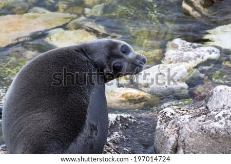 View of the Baikal seal (nerpa) which relaxes on the shore of Lake Baikal