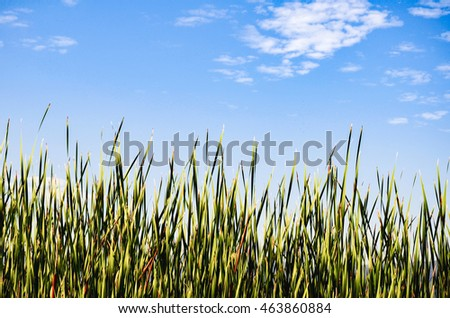 View of the blue sky from the green rice paddy, Huasca de Ocampo, Mexico