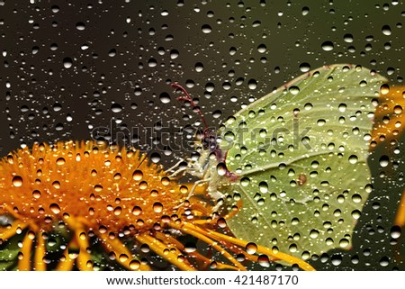 View of the Butterfly through the window glass covered by raindrops