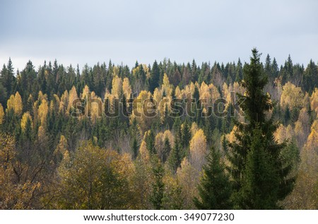 View of the colorful autumn forest