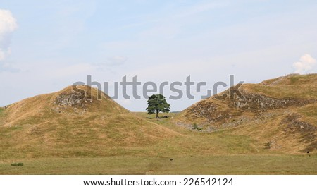 View of the famous Sycamore Gap in the Peel Crags on the route of Hadrian's Wall in Northumberland, England. Made famous in the Hollywood film 'Robin Hood Prince of Thieves', starring Kevin Costner.