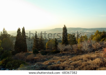 View of the forest in Israel. Beit Shemesh. - stock photo