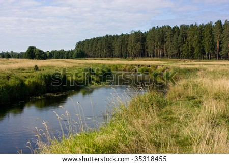view of the grassy riverside near the forest in bright summer day
