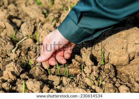 VIew of the Hand of a farmer checking earth