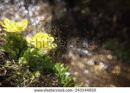 view of the mountain flowers through the glass with raindrops