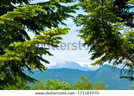 View of the mountains in France, with spruce trees in the foreground.