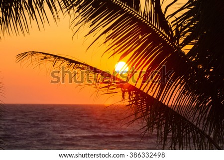 View of the orange sunset through palm tree branches in Hawaii