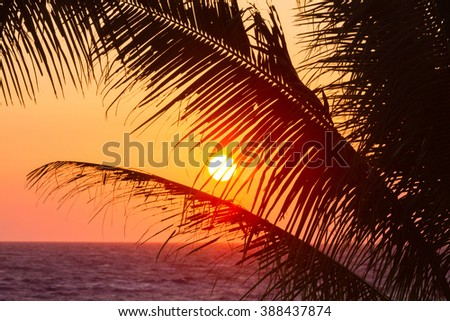 View of the orange sunset through palm tree branches in Hawaii - stock photo