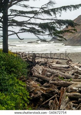 View of the Oregon Coast through the Trees of Ecola State Park - stock photo
