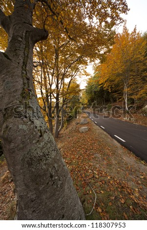 View of the peaceful landscapes of Montseny in autumn