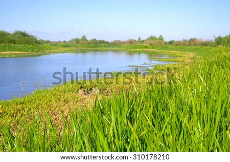 View of the river Kopanets on a sunny summer day, Stolin, Belarus.