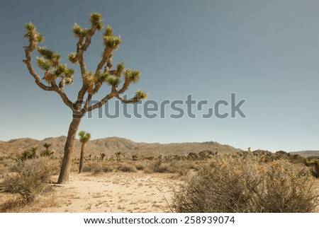 view of the rocks and trees in Joshua tree national park - stock photo