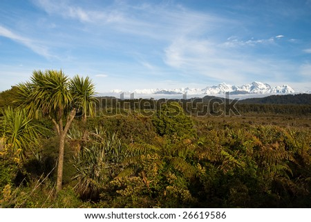 View of the Southern Alps across native bush - stock photo