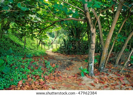View of the tropical trail which leads to secluded Lumahai Beach on the north shore of Kauai, Hawaii. - stock photo
