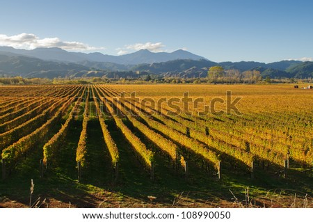 View of the vineyards in the Marlborough district of New Zealand's South Island - stock photo