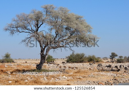 View of the waterhole, Okaukeujo Rest Camp,  Etosha National Park, Namibia
