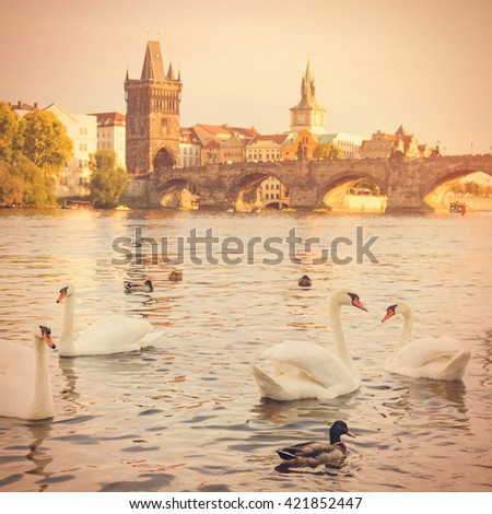 View of the white swans and ducks in the water, the stone bridge, buildings and trees. Toned