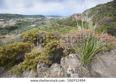 View of tipycal countryside in Pantelleria, Sicily, Italy, Europe  - stock photo