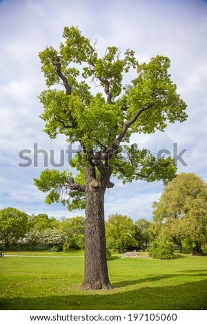 View of tree, Fredhall, Sweden