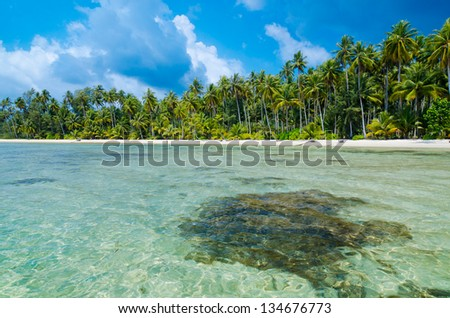 View of tropical beach with transparent water on foreground, horizontal