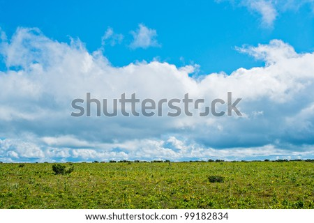 View of tundra in the Kvarkush plateau. Perm Krai. Russia.