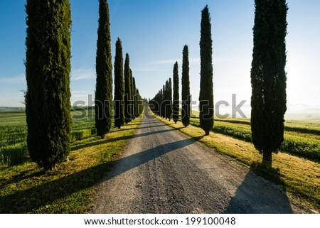 View of typical road in Tuscany, lined with cypress trees, in beautiful morning light - stock photo
